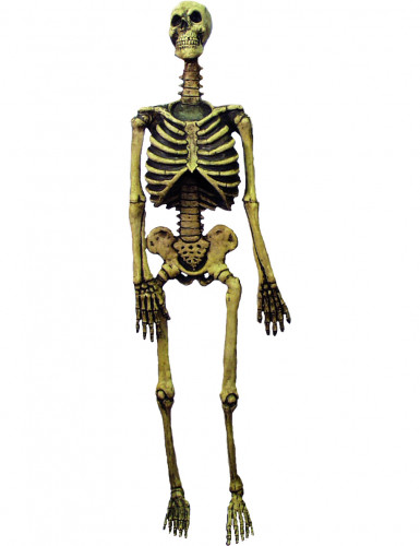Squelette Halloween 150cm