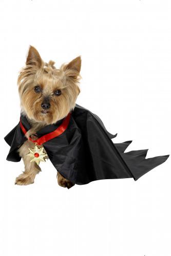 Déguisement dracula chien Halloween