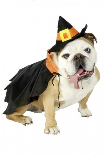 Déguisement sorcière chien Halloween