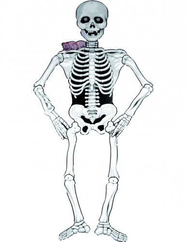 Décoration squelette cartonné halloween