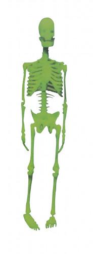 Décoration squelette phosphorescent Halloween